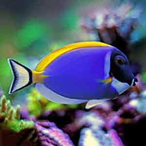 salt water fish for sale online