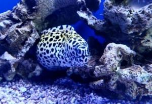 baby eel for sale
