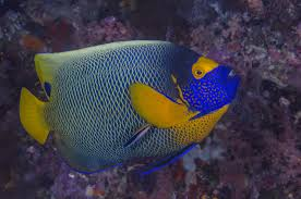 angelfish water conditions