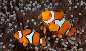 clownfish care sheet