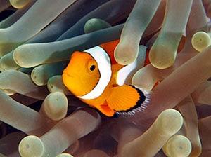 clownfish tank