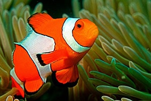 clownfish tank conditions