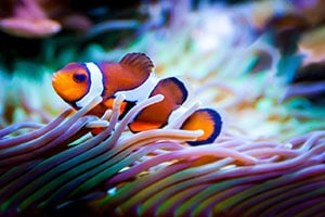 clownfish water conditions