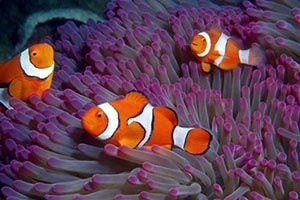 clownfish water filtration