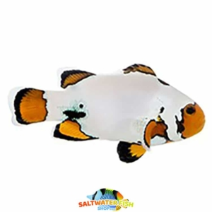 Extreme snowflake clownfish for sale