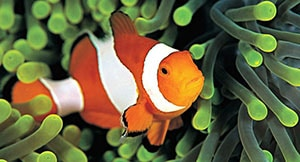 how to care for a clownfish