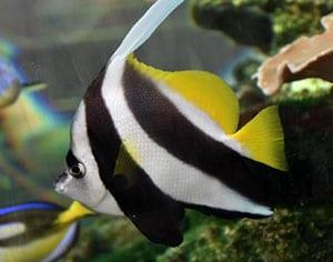 tang fish salinity