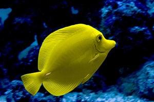 tang fish tank