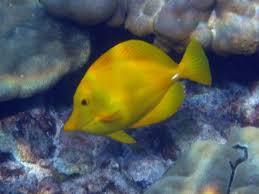 yellow tang water hardness
