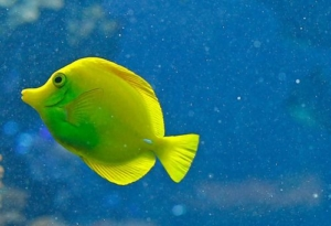 yellow tang water filtration