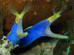 blue ribbon eel lighting