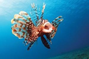 aggressive saltwater fish