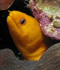 most aggressive saltwater fish